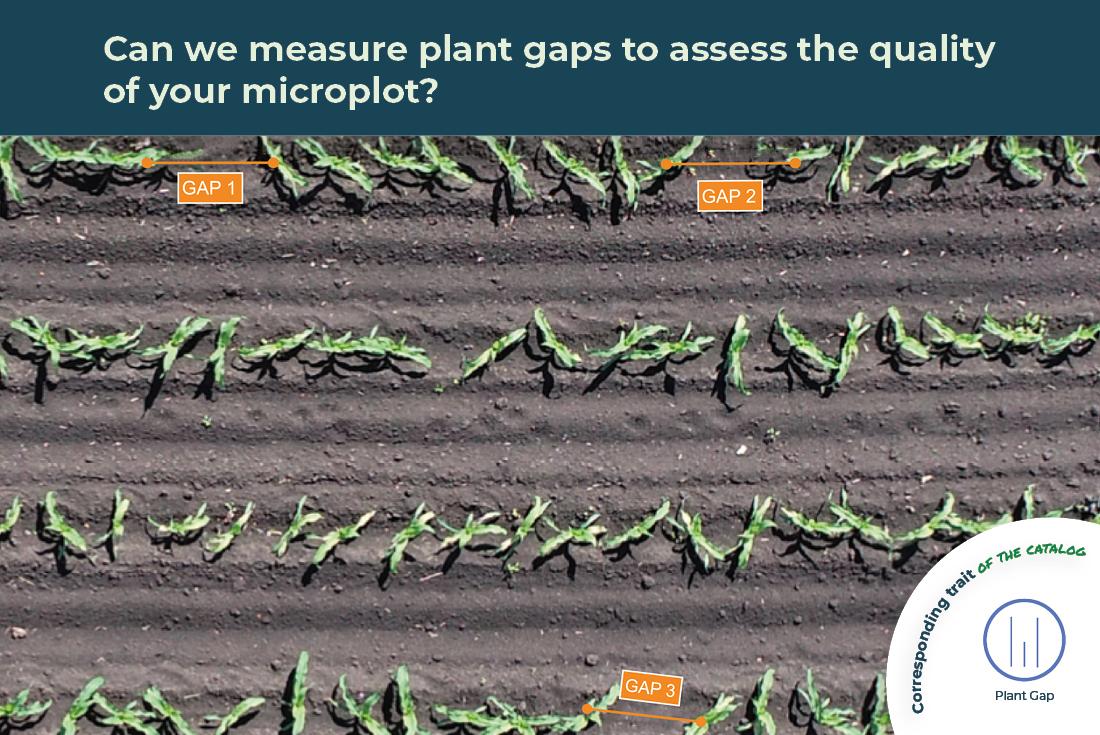 plant gap trait illustrated