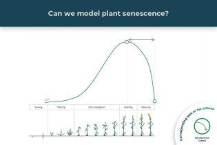 senescence trait illustrated