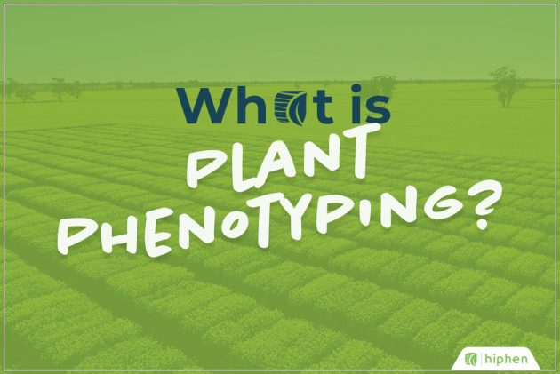 what is plant phenotyping banner
