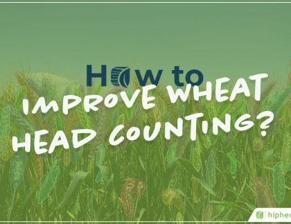improve wheat head counting with the global wheat challenge