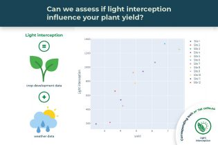 light interception trait illustrated