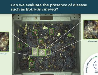 botrytis detection illustrated