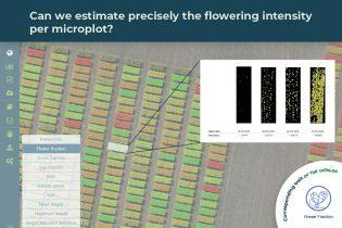 flower fraction trait illustrated