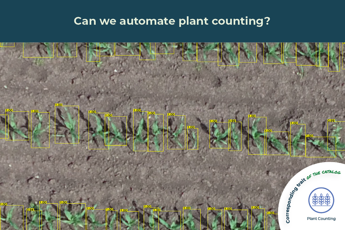 plant counting trait illustrated