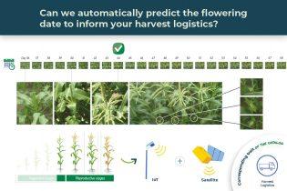 harvest logistics illustrated