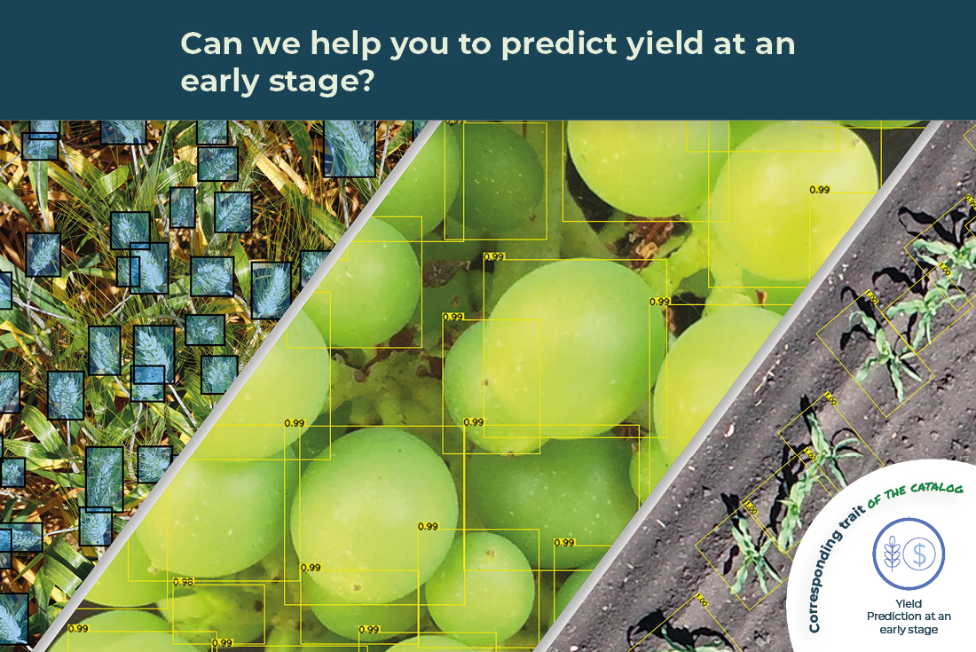 yield prediction at an early stage illustrated